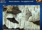 Natural selection, the peppered moth | Recurso educativo 40714