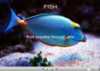 Fish | Recurso educativo 23769