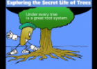 The secret life of trees | Recurso educativo 21793